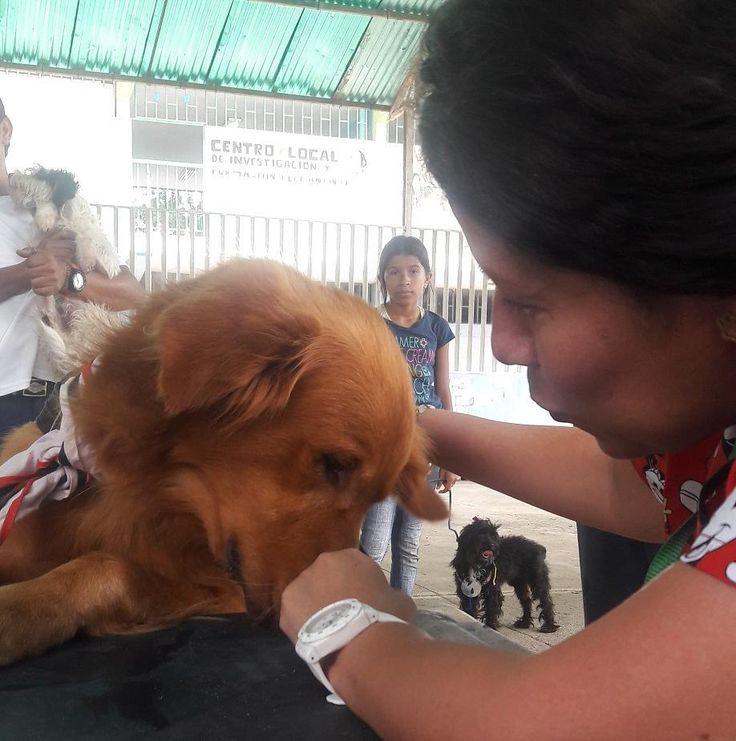 Hay que concientizar a los más jóvenes sobre el respeto a la vida Jornada de atención veterinaria gratuita en apoyo al grupo de Scouts en cagua  7|10|17 gracias a la Fundación Ángeles Peludos @angelespeludospyc #veterinaria #vets #veterinarian #perro #golden #pets #cagua #aragua #venezuela