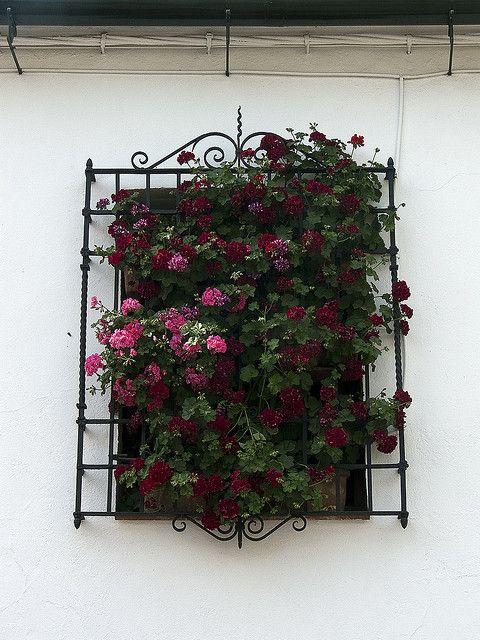 mejores 16 imágenes de rejas de flores en pinterest | rejas