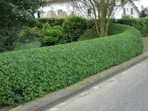 Perfect hedges (to frame your garden!) by Colour Your Life ...