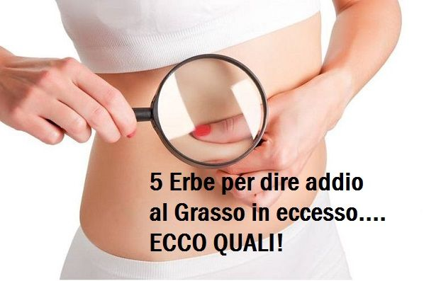 Ecco le 5 erbe che aiutano ad eliminare l'accumulo di grasso…e non solo! Lo avresti mai detto?LEGGI http://jedasupport.altervista.org/blog/attualita/sanita/salute-sanita/ecco-le-5-erbe-che-aiutano-ad-eliminare-laccumulo-di-grasso-e-non-solo-lo-avresti-mai-dettoleggi/