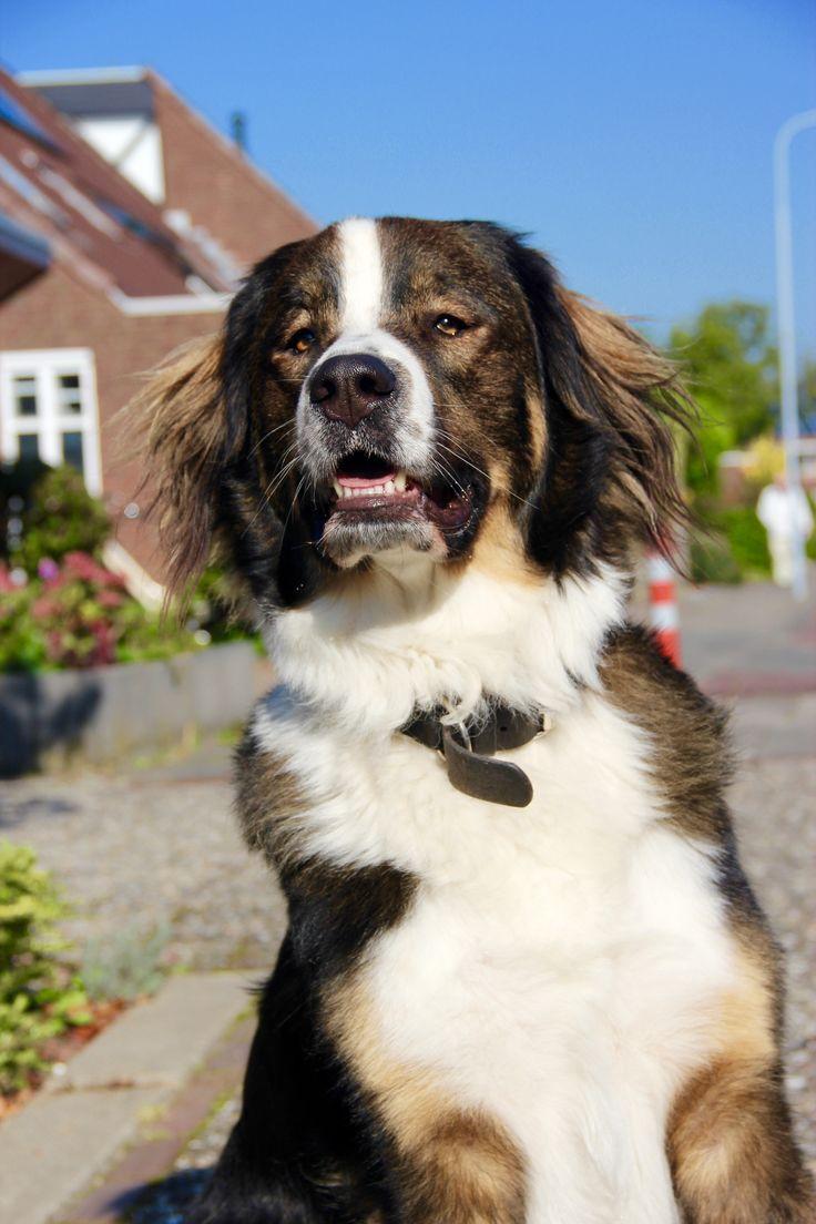 protecting the neighborhood #koningbinc #dog #animal #lovemydog #security