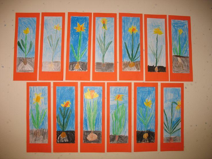 Narcissen, kleurpotlood op papier. Groep 3, maart 2014