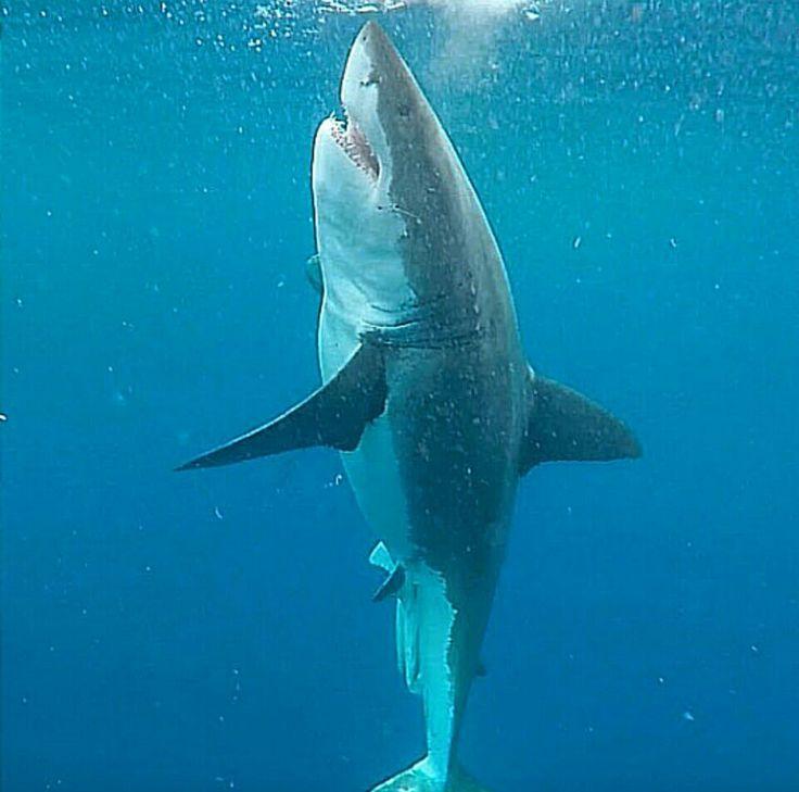dance ocean shark - photo #30