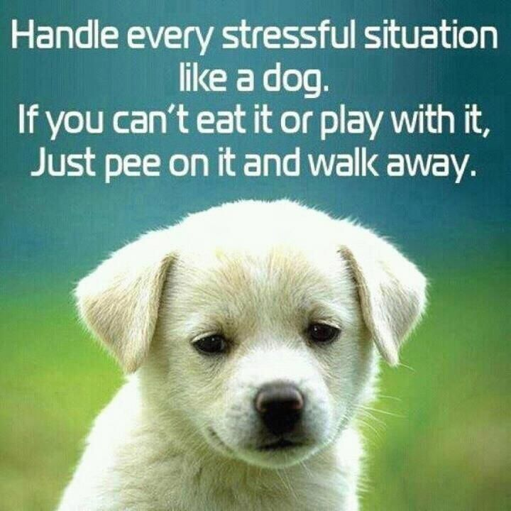 Best 45 Quotes For Stress Relief