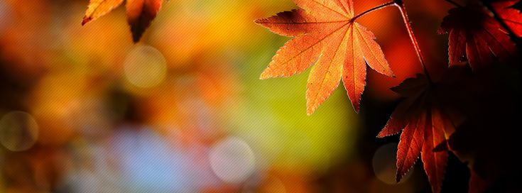 Autumn Facebook Cover fall my time of year