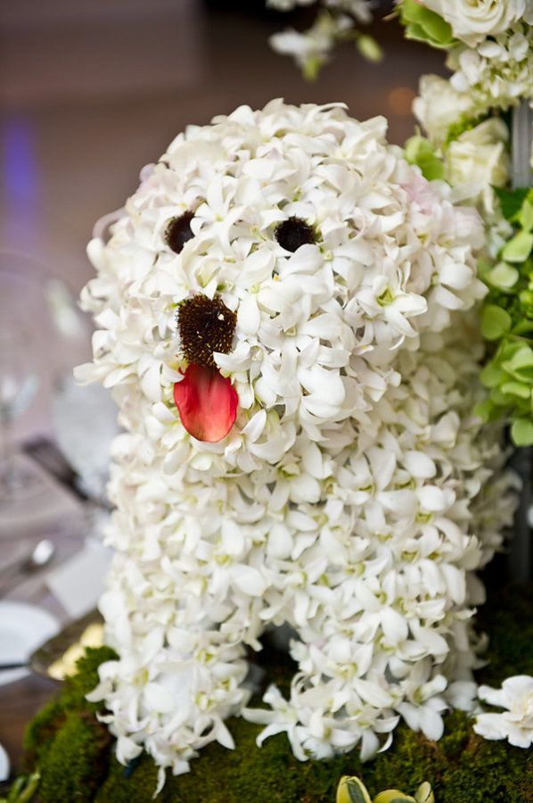 38 best Dog Flower Bouquets images on Pinterest | Flower ...