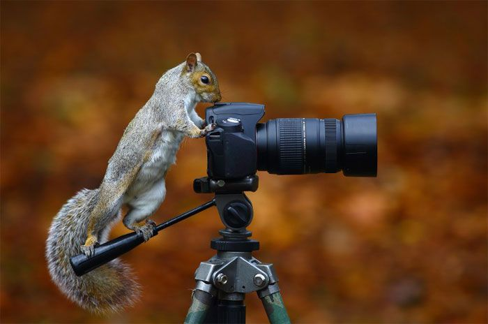 19 Photos of Animals Getting Cozy with Camera Gear | Bored Daddy | Bored Daddy.....squirrely image stabilization!