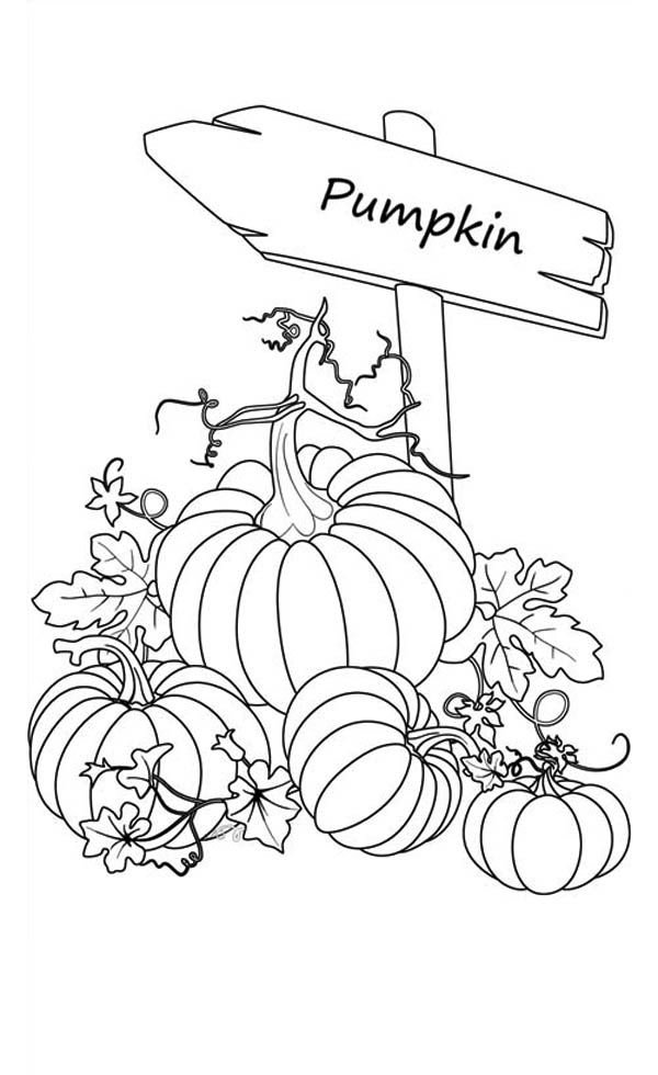 Pumpkins, : Sign of Pumpkins Garden Coloring Page