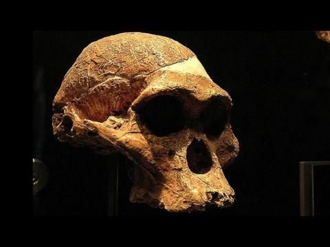 Little Foot, l'australopithèque qui pourrait être notre ancêtre