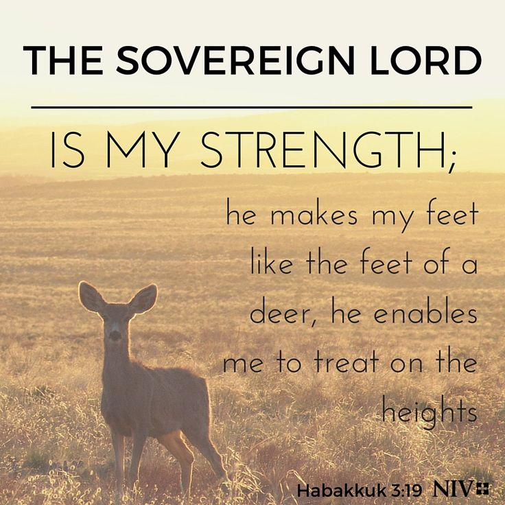 The Sovereign Lord is my strength | Courage | Pinterest