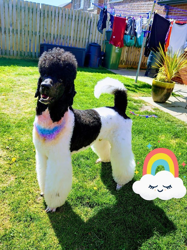 OPAWZ Pet Hair Chalk in 2020 | Dog dye, Pets, Hair chalk