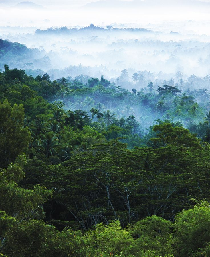 https://flic.kr/p/fqkAvN | Dawn mist of Borobudur