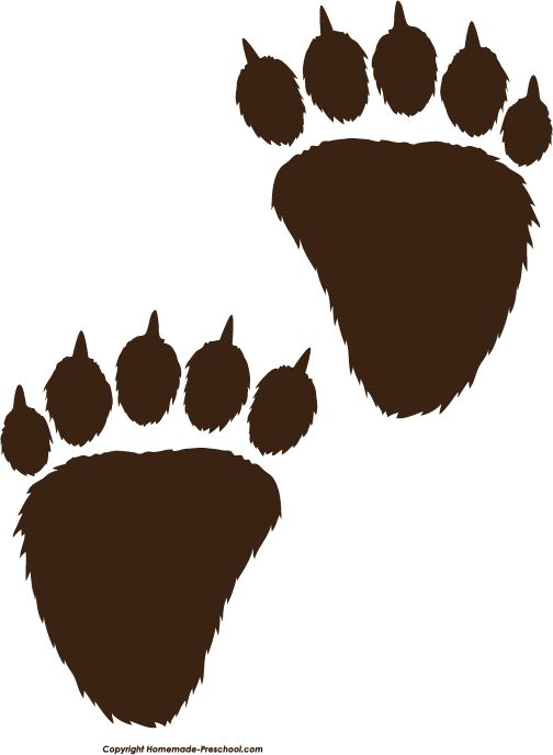 Images : Bear Prints