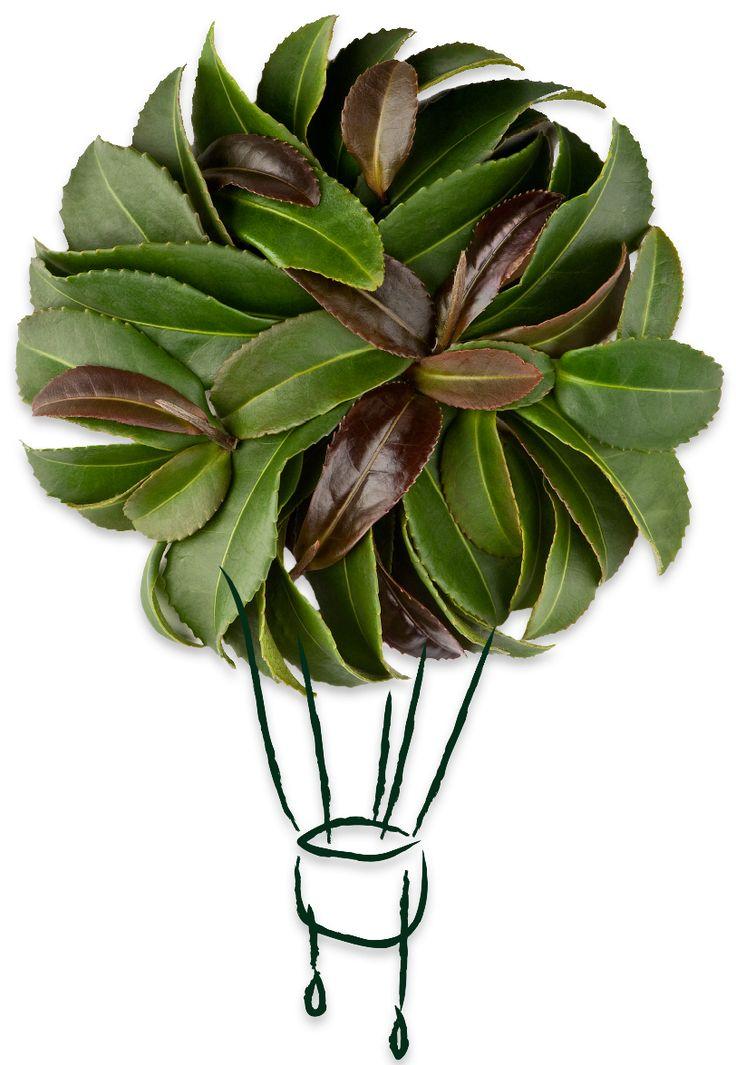 Loose Leaf Tea - Premium Loose Tea in Bulk & Tins | The Tea Spot
