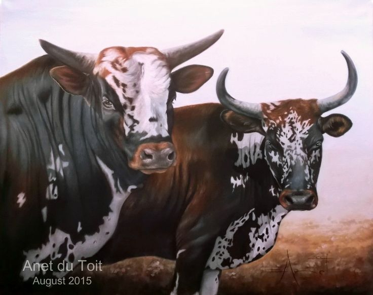 Nguni's Oil on canvas 127cm x 101cm SOLD