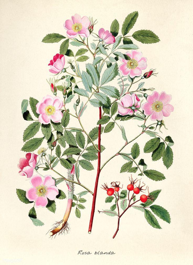 Картинки ботаника винтаж, картинки