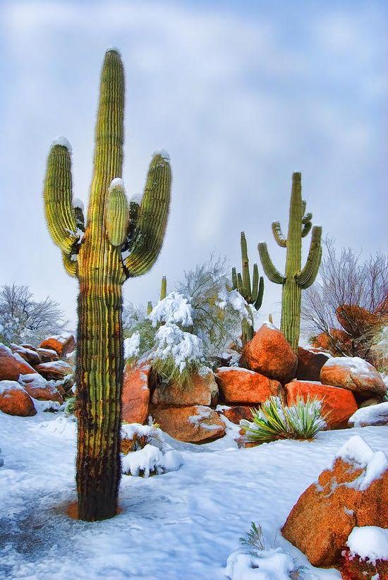 Snow on the Arizona Desert