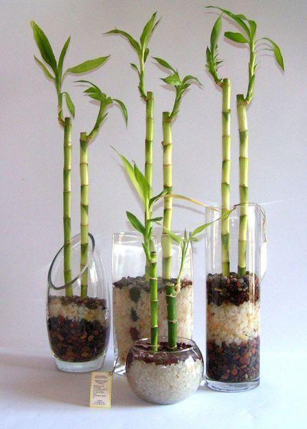 Bambús de la suerte — Natural branding