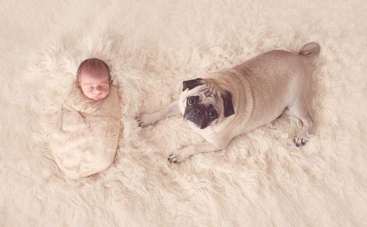 newborn photography, newborn and dog, newborn with pet, baby and pug