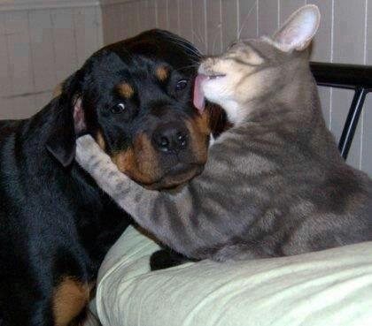 """Come here, you sweet little, numsy, smooch, smooch, smooch......"""