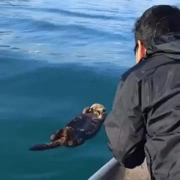 Waking up a sleeping otter