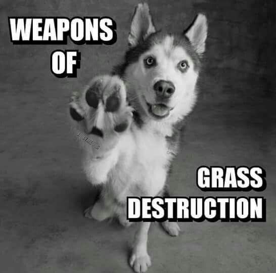 Protect your lawn from those weapons of grass destruction!