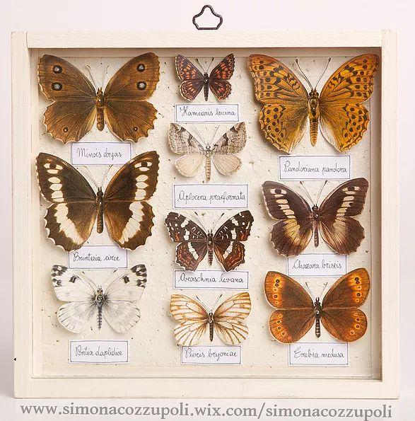 Simona Cozzupoli - Farfalle  2015  Scatola di legno, vetro, polistirolo verniciato, carta e spilli  cm 17,7 x 18,6 x 2,8