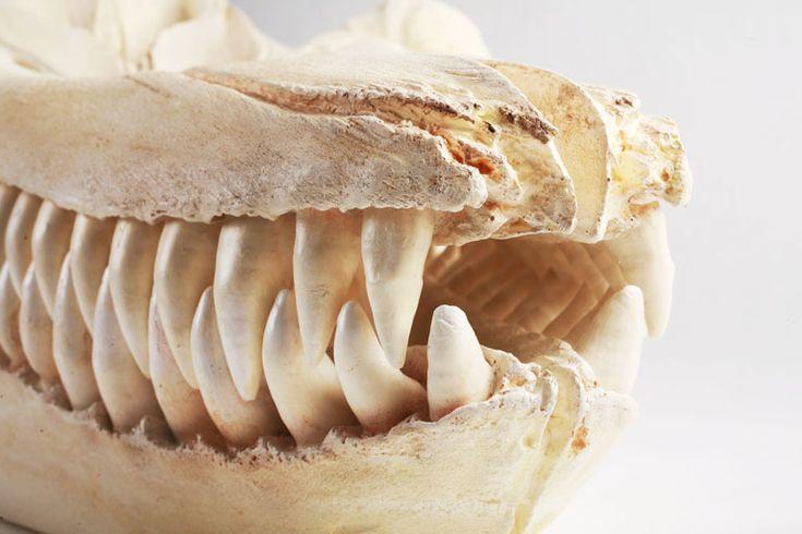 Study: SeaWorld's Apex Predators Are Rotting to the Core