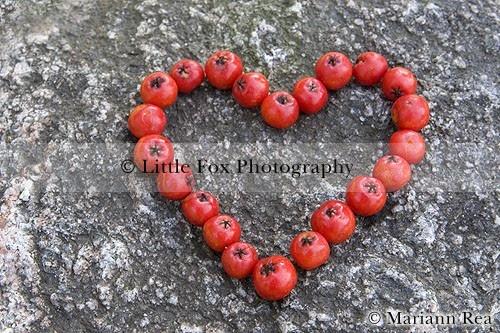 Rowan berries heart