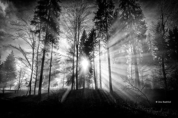 SELECTION OF THE DAY by #Expo #FineArt #Photography Controluce in bosco Monte Avena (BL) - 2014 Photo © Lino Basiricò #Nature