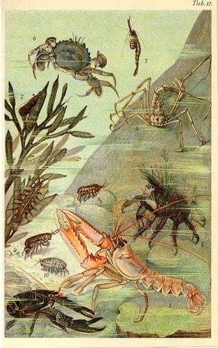 1890 Marine Life Lobster Crab Shrimp Antique ...