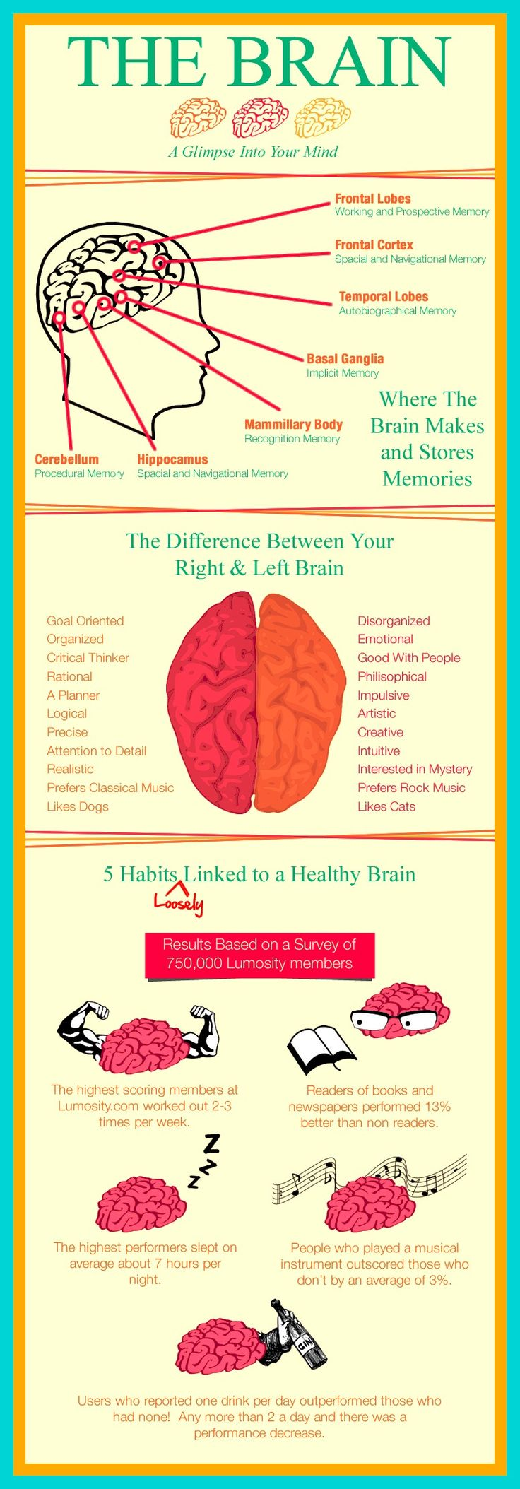 the differences between the right and left hemisphere The female brain appears to have increased connection between neurons in the  right and left hemispheres of the brain, and males seem to  8 to 22 years old  and found distinct differences in the brains of male versus female.