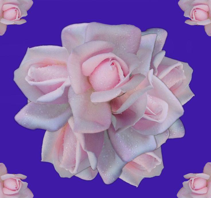 """""""Royal Ribbons"""" - Rose"""
