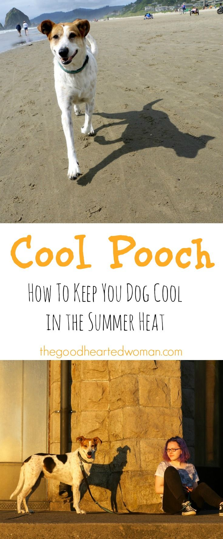 Cool Pooch: Tips for Keeping Your Dog Cool in the Summer | The Good Hearted Woman