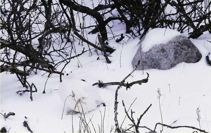 Hidden Bird In Snow Picture Riddle : Picture Brain Teasers And Answers