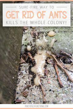 25 best ideas about killing ants on pinterest ant killer borax natural bug killer and. Black Bedroom Furniture Sets. Home Design Ideas