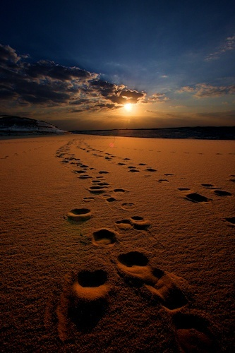 96 best images about Footprints in the Sand on Pinterest ...