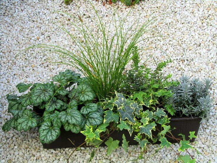 Bepflanzter Balkonkasten 60 cm wintergrün - Pflanzen Versand Harro's Pflanzenwelt kaufen bestellen online