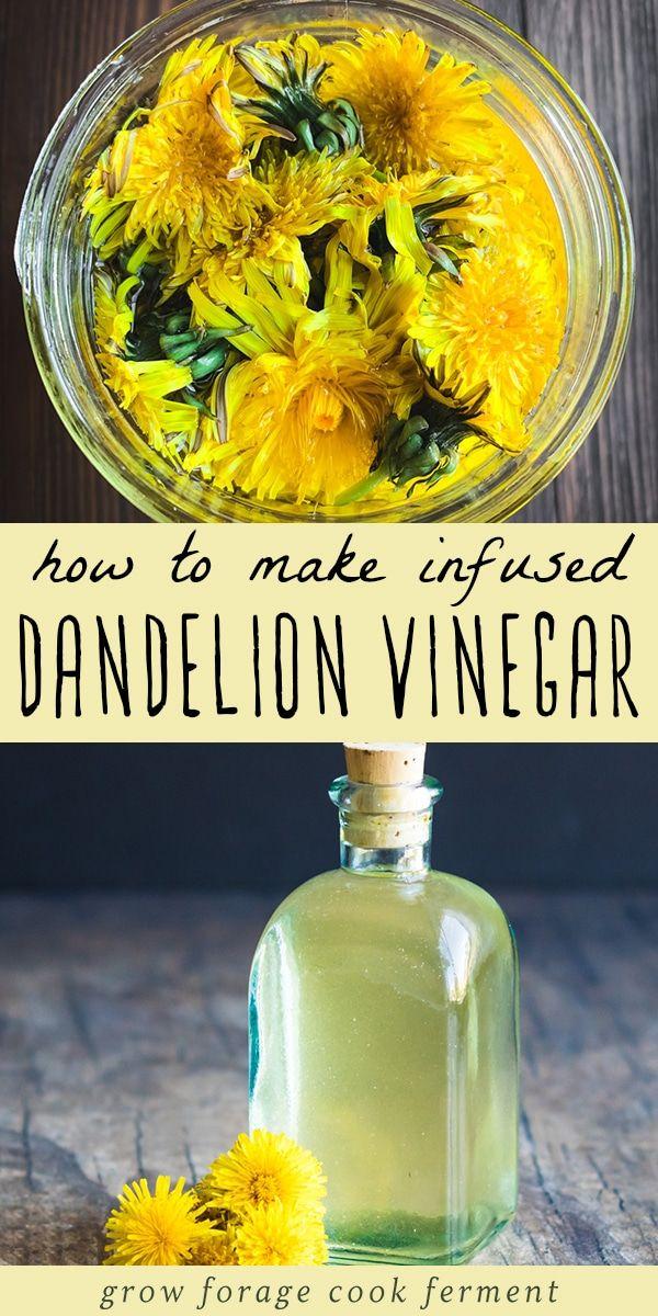 Infused Dandelion Vinegar Recipe Dandelion Recipes Herbal Vinegar Vinegar