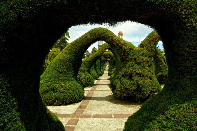 Парк «Франциско Альварадо», Коста-Рика  В Коста-Рике находится фигурный парк Франциско Альварадо, названый именем филиппинского писателя. Его создатель — ландшафтный дизайнер Евангелисто Бренес — прославился тем, что создал тоннель, используя только садовые ножницы.