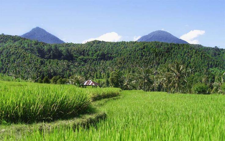 Prachtige rijstvelden in Munduk, in het noorden van Bali. Kijk op onze website voor de mooiste reizen naar het schitterende Bali! Rondreis - Vakantie - Indonesië - Bali - Munduk - Rijstvelden - Sawah's