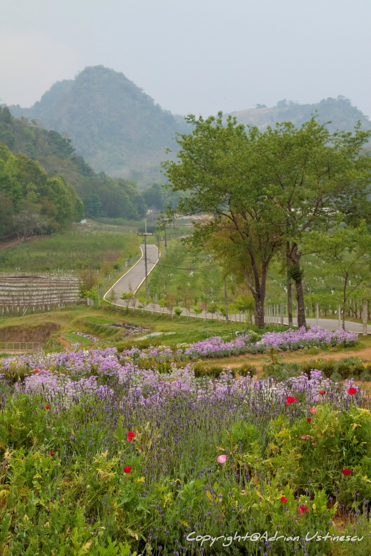"""Doi Angkhang - Thailand  """"The road in the garden"""""""