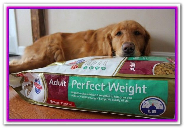 Best Weight Control Dog Food For Labs The 5 Top Rated Diet Dog Foods Our Vet Control Hundefutter Gesundes Hundefutter Hunde Futter