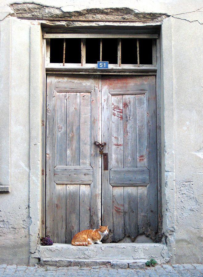 """""""Cats & Grapes"""" by Evren Kacar, via 500px."""