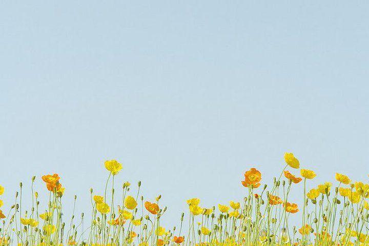 Flower Story In 2020 Aesthetic Desktop Wallpaper Desktop Wallpaper Art Laptop Wallpaper Desktop Wallpapers