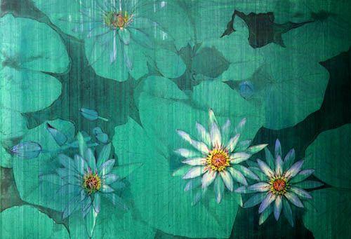 flower power illusion - photo #39