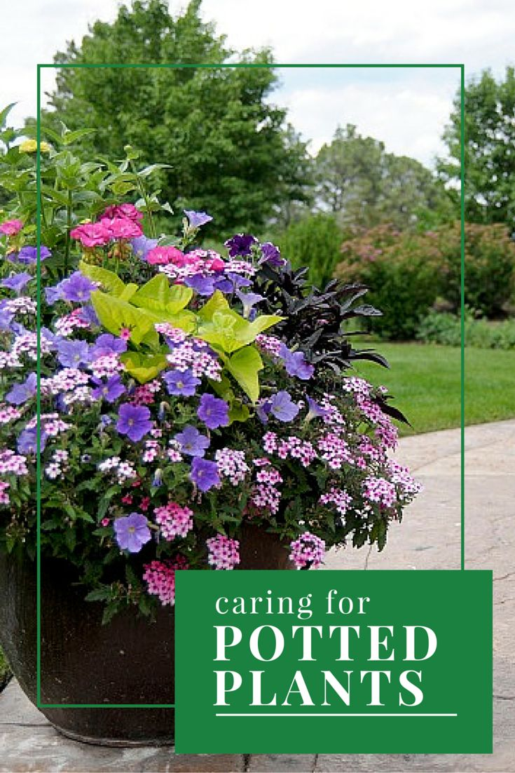 63 best colorado springs images on pinterest colorado springs caring for potted plants in colorado springs dhlflorist Choice Image