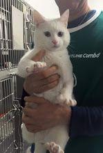 Foto: Nessuno vuole adottare questo stupendo gattino ??? Non può continuare a vivere alla clinica veterinaria e men che meno in strada ....è dolcissimo bellissimo. ..su fatevi avanti per questa creatura che ha già sofferto tanto ...