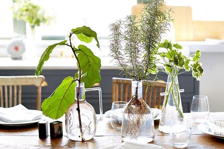 İşin aslı şu ki evde bitki yetiştirme de toprak kullanmamak ne yeni bir çözüm ne de bir büyücü işi! Tamamı ile bildiğimiz ve bildiğiniz bir uygulamadır. Nasıl mı? Şöyle ki; bahar geldi ve yaz da geliyor. Şimdi yavaştan evde yetiştirdiğiniz bitkilerin topraklarını değiştirecek, kurumuş dallarını budayacak ve belki de çok büyüdüğü için uygun bir kaç …