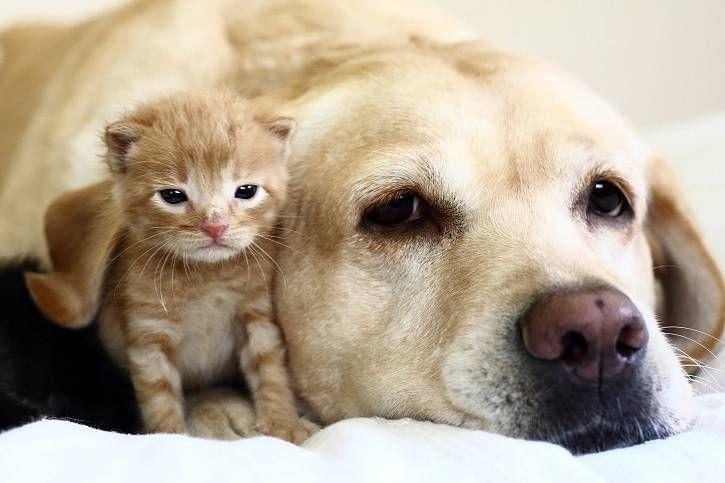 Roztomilé fotky zvířat - Google Search
